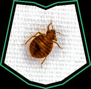 Bed Bugs Control Buckeye AZ