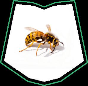 Wasp Exterminator Buckeye AZ